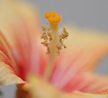 hibiscus by Karen E Camilleri