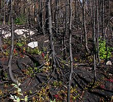Burn Zone at Jackfish Ontario Canada on Lake Superior by loralea