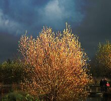 The burning bush by buttonpresser
