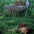 """Growing Cow Horn"" (South Africa, Free State) by Qnita"