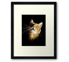 What's up there George? Framed Print