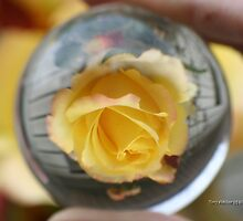 Yellow Rose In Crystal Ball by Terry Aldhizer