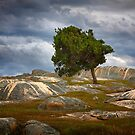 Solitary Tree - Dog Rocks by Hans Kawitzki