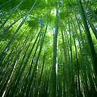 Bamboo Forest by Jeremy Ham