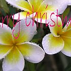Merry Christmas Frangipani by Virginia McGowan