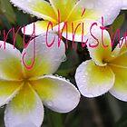 Merry Christmas Frangipani by Virginia McGowan