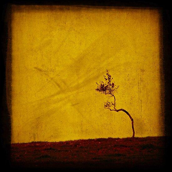 Forlorn by Andrew Paranavitana