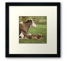 cow and calf in field Framed Print