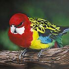 Eastern Rosella by carss66