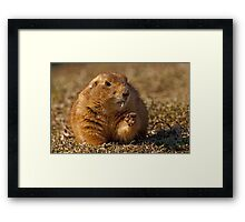 Caught eating again! Framed Print