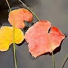 Floating Leaves by John Butler