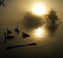 Richmond Park at dawn by Martin76