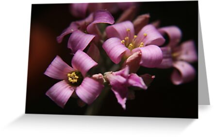 Purple love. Beautiful flowers captured in Bloemfontein, South Africa. by Mauds