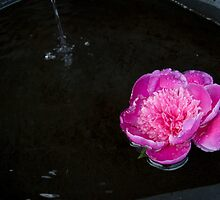 flowers in the fountain by Skye Hohmann
