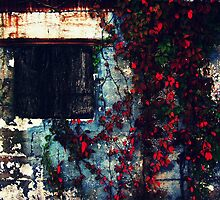 Window to Nowhere  by Lea  Weikert