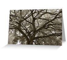 Abiquiu Fall Cottonwoods Greeting Card