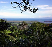 The Daintree River flows out to sea by John Mitchell