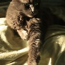 Smokey basking in the morning sunlight by Megan Noble