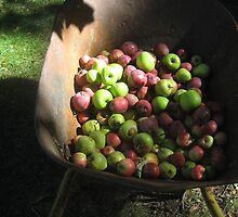 Apple Barrow by Tamijo