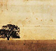 Lone She-oak, near Warooka S.A. by Steph Ball