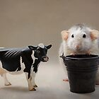 Rosie just finished milking the cow :) by Ellen van Deelen