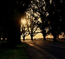 avenue of honour bacchus marsh by fazza