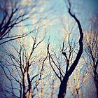the trees.. by Elizabeth Pellette