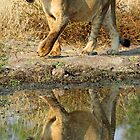 Lioness of the otthawa pride! by jozi1