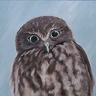 Looking at you - morepork by Pam Buffery
