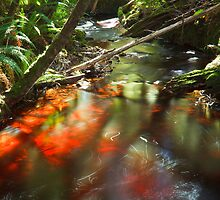Morning Light, Creekton Rivulet by Chris Cobern