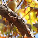 Autumn woodpecker by John Banks