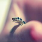Mr. Gecko by Lars