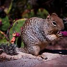 Kaibab Squirrel  by Melissa Seaback
