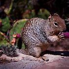 Kaibab Squirrel  by Melissa Seaback