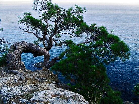 Pine on rock by Andrey Kudinov