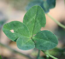 Four Leaf Clover I by Terry Aldhizer