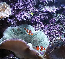 Atlantic City Aquarium by capturingsmiles