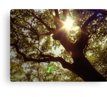 swimming in the sunlight, i will always fly back to you Canvas Print