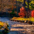 Herring Run in Autumn by Monica M. Scanlan