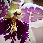 The Year in Orchids by Gerry Daniel