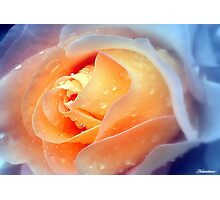 Raindrops On Roses Photographic Print