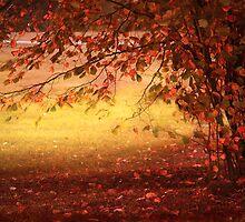 Autumn Colours by Danuta Antas