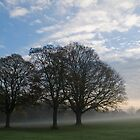 Misty November morning No3 by StephenRB