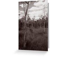 Trees - Big Cypress Preserve Greeting Card