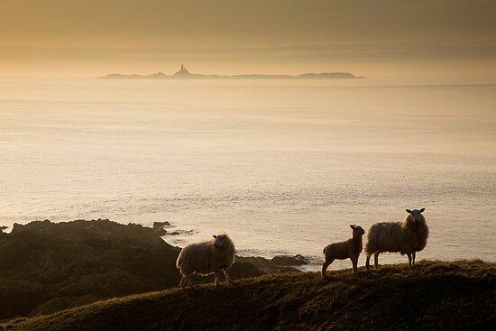 """""""The mist rolls in """" by Raymond Kerr"""