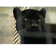 Wild and Captive Photographic Print