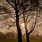 Silhouetted trees by David Isaacson