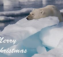 Polar Bear - Merry Christmas Card by Steve Bulford