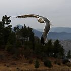 Quick Flight in the Brisk Mountain Air Does a Seagull Good by Corri Gryting Gutzman