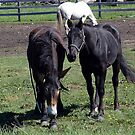 Horse and Mule by Jann Ashworth